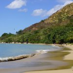 Coconut Palms along the Beach