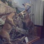 Fighting Bucks decor