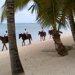 Horse riding on beach