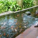 Рыбок можно покормить