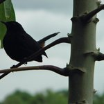 Commonly seen birds