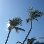 tall palm trees