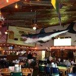 Large shark hanging inside