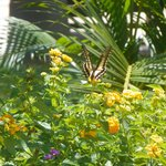 Bela Borboleta que fotografamos no jardim