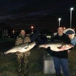 50lb Rockfish - Fresh Seafood!
