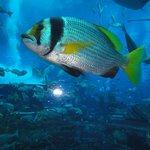 Uno dei 65000 pesci dell'acquario dell'hotel