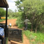 Electric wire to keep elephants out