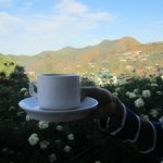 Morning cup of tea- view from the room