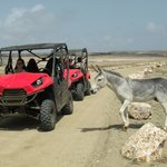 Aruba Sunrise Tour - You get to see goats and donkeys