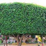 przepiękne drzewo na dziedzińcu