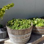 how to recycle barriques at moretti winery