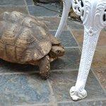 Sköldpaddan som bor i närheten