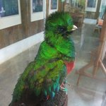 Biotopo del Quetzal Foto