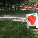 Berry garden near the Great Taste Cycle Trail, Nelson NZ