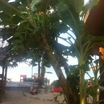 banana tree in the centre of restaurant