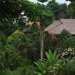 Vue des bungalows du restaurant