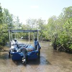 Terugtocht door het mangrovebos