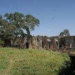 De grote moskee met de baobapboom die daarin groeit