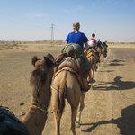 Camel safari!