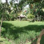 Les rizières dans le jardin de l'hôtel