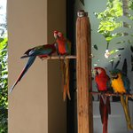 birds on grounds