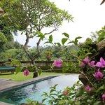 Pool Garden Villa 201