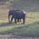 Elephant watching on Periyar Lake