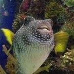 Sweet Spot Fishy