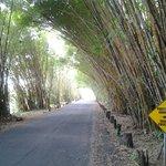petit chemin en bamboo à droite apres le pont pour vous rendre au resort