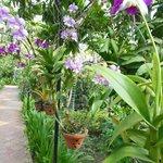 yhe garden
