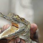 Crocodile farm right across from A'Zambezi