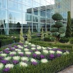 Colorful, hardy winter cabbages and topiary outside atrium, on walk toward Potomac Riverbank