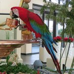 Another pic of Merlot, the hotel parrot