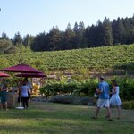 looking up at the vineyard and redwood trees