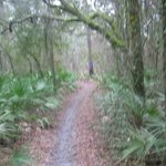 Horse trail through palmetto stand in forest across from OFH