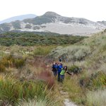 Hiking through the dunes of Mason Bay