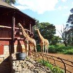 Giraffee Centre Nairobi