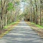 Beautiful Trail Canopy