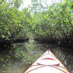 The Mangrove Tunnel