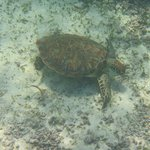 One of several turtles we saw that day