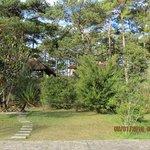 garden in a villa