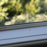 bird droppings on the window sill