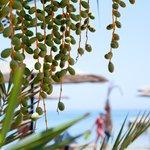 Финики на пляже