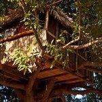 Bungalow dans les arbres