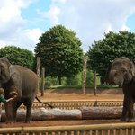 Elephant display