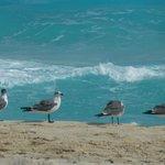 Playa 7