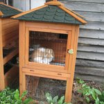 Mast Farm bunny