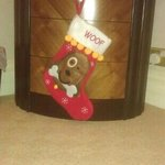 even the dog has his own Xmas stocking