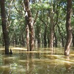 The flooded forest