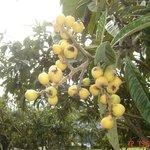 Una fruta de la zona